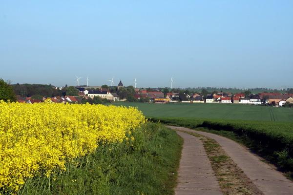 Mein NiederndodeLEBEN bei Magdeburg mit Rapsfeld, Hintergrund OTSchnarsleben